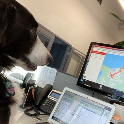 Co-Wagging: A Dog's Life at a Coworking Space